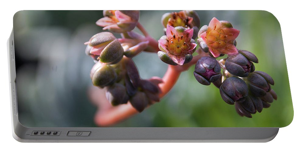 Succulent Portable Battery Charger featuring the photograph She's So Unusual by Susan Wright