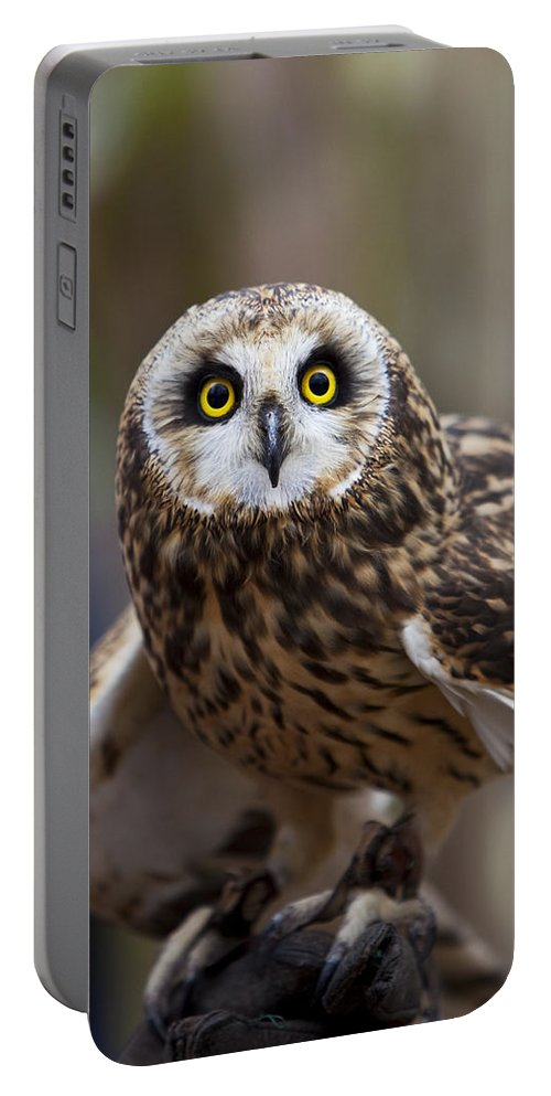 Owl Portable Battery Charger featuring the photograph Short Eared Owl by Amy Jackson