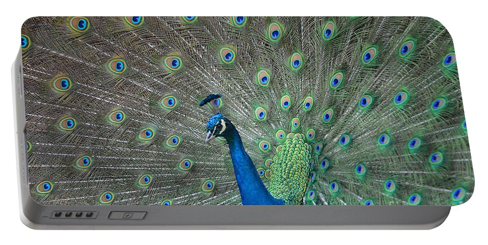 Peacock Portable Battery Charger featuring the photograph Showing Out by Deanna Cagle
