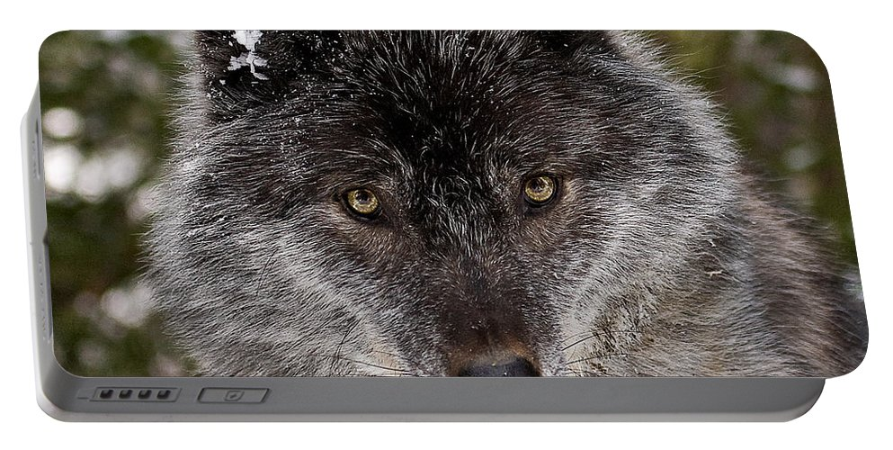 Wild Portable Battery Charger featuring the photograph Shy by Colette Panaioti
