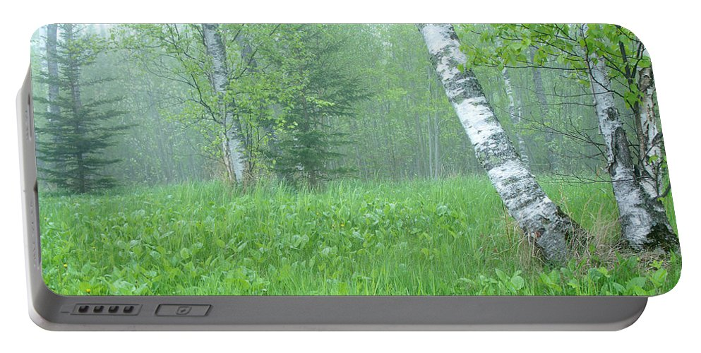 Landscape Portable Battery Charger featuring the photograph Silent Birch by Bill Morgenstern