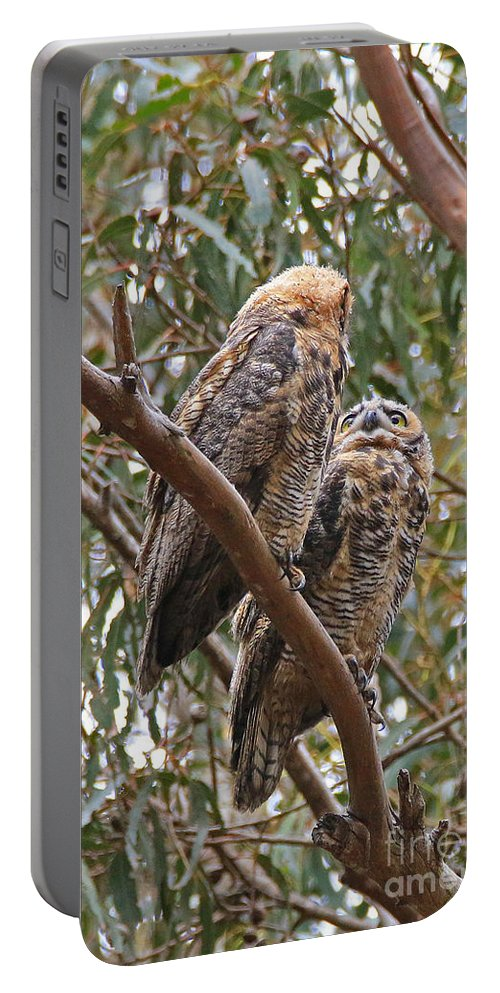 Owl Portable Battery Charger featuring the photograph Silent Conversation by Craig Corwin
