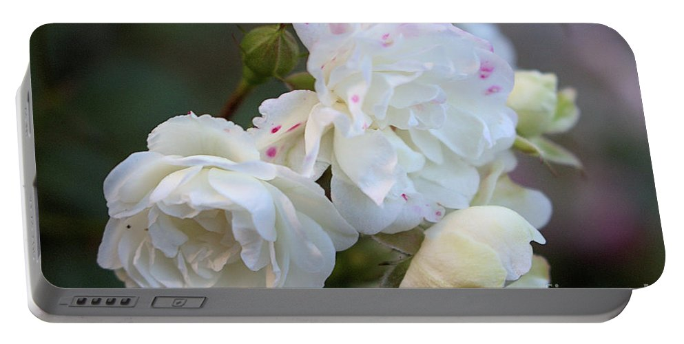 White Rose Portable Battery Charger featuring the photograph Silky Rose 2 by Victor K