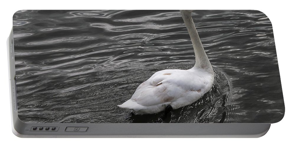 Swan Portable Battery Charger featuring the photograph Silver Swan by John Daly