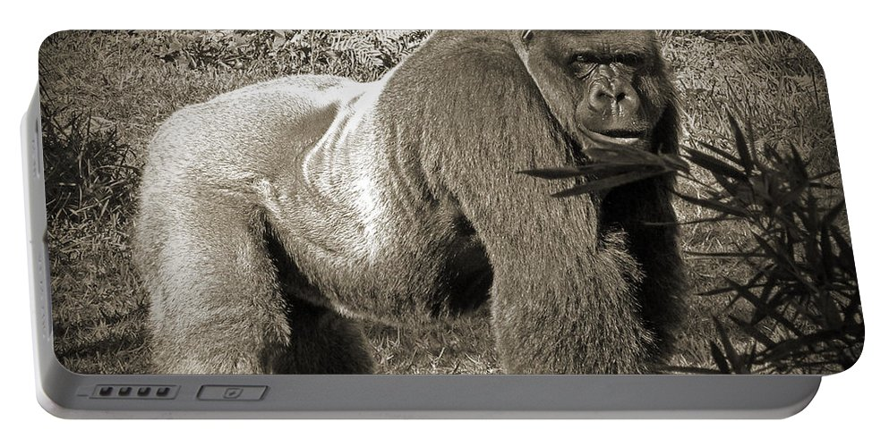 Silverback Portable Battery Charger featuring the photograph Silverback II by Steven Sparks