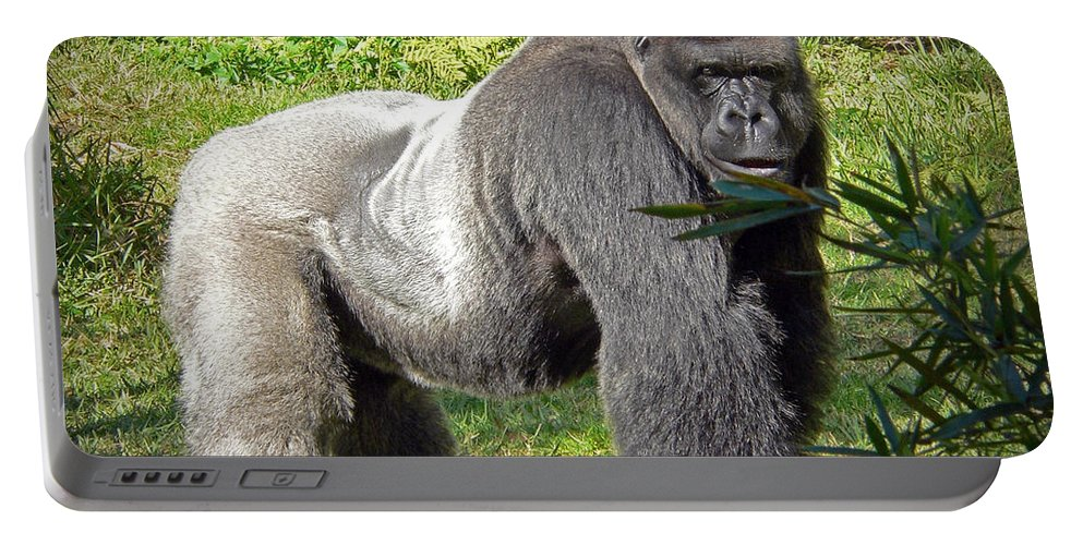 Silverback Portable Battery Charger featuring the photograph Silverback by Steven Sparks