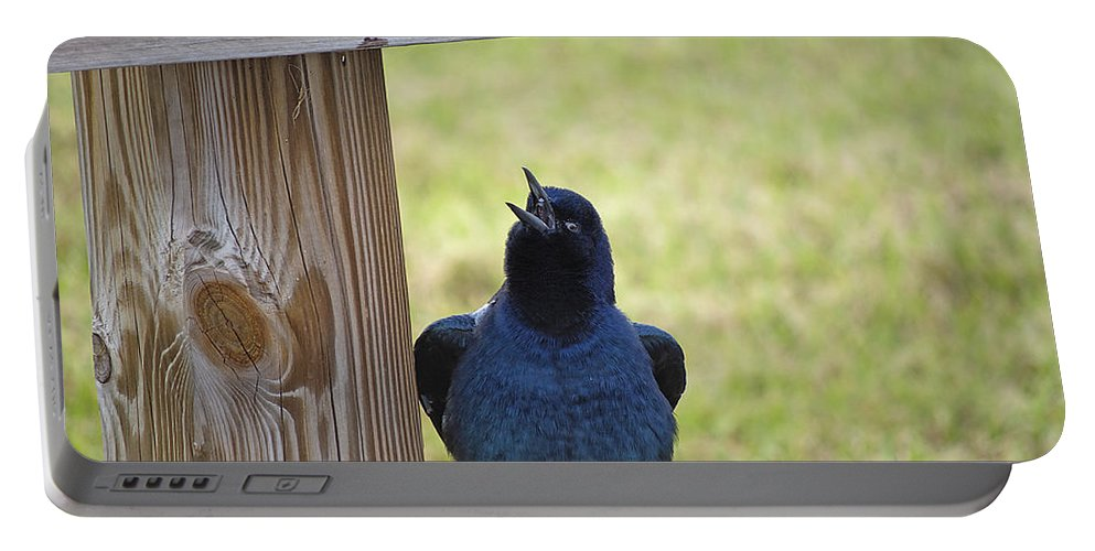 Grackle Portable Battery Charger featuring the photograph Singing Grackle by Kenneth Albin