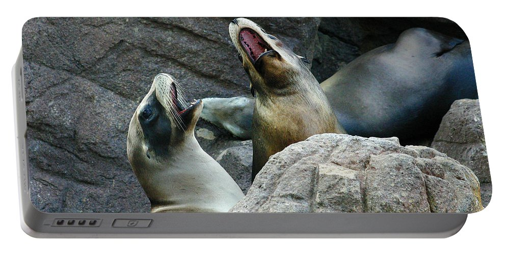 Sea Lions Portable Battery Charger featuring the photograph Singing Sea Lions by Anthony Jones