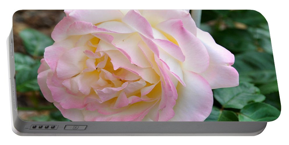 Peace Rose Portable Battery Charger featuring the photograph Single Peace Rose by Wanda-Lynn Searles
