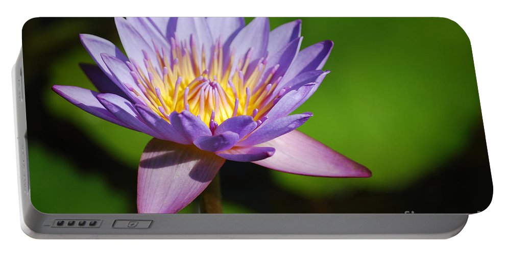 Nymphaea Portable Battery Charger featuring the photograph Single Purple Water Lily Number One by Heather Kirk