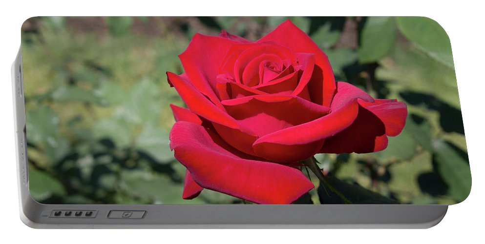 Red Rose Portable Battery Charger featuring the photograph Single Red Rose by LaMont Johnson