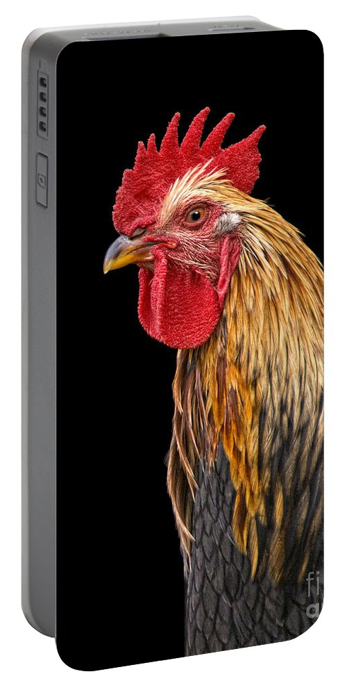 Rooster Portable Battery Charger featuring the photograph Single Rooster by Timothy Flanigan and Debbie Flanigan Nature Exposure
