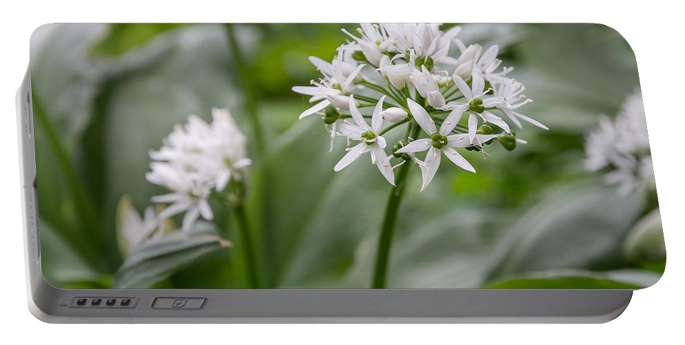 Allium Portable Battery Charger featuring the photograph Single Stem Of Wild Garlic by David Head