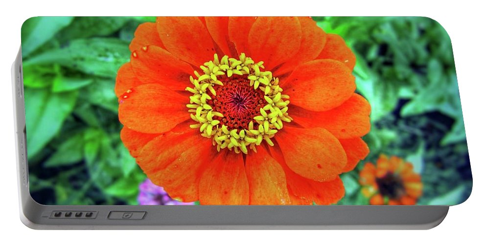 Flower Portable Battery Charger featuring the photograph Single Zinnia by John Myers