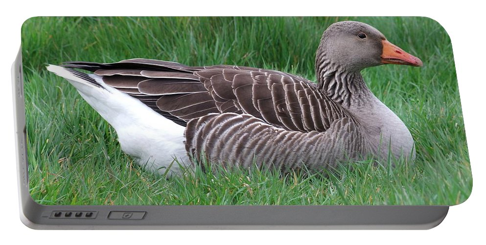 Goose Portable Battery Charger featuring the photograph Sitting Goose by Andrew Ford