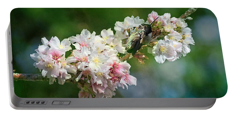 Hummer Portable Battery Charger featuring the photograph Sitting Guard In The Cherry Blossoms by Lynn Bauer