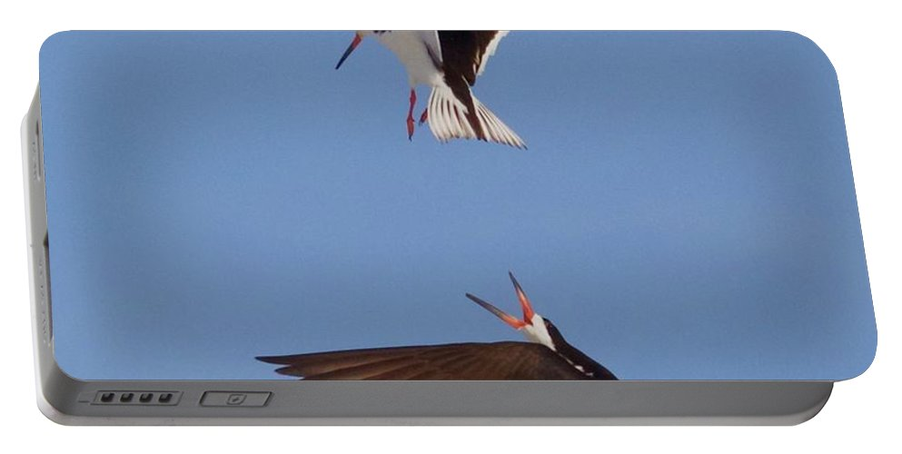 A Pair Of Black Skimmers In Flight Portable Battery Charger featuring the photograph Skimmers In Flight by John Kearns
