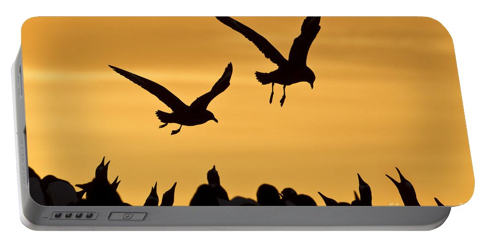 Southern Skua Portable Battery Charger featuring the photograph Skuas And Penguins by Jean-Louis Klein & Marie-Luce Hubert