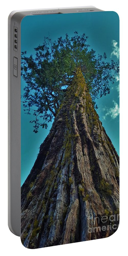 Panther Meadows: Summer: Tall: Tree: Reaching For The Sky Portable Battery Charger featuring the photograph Sky Reacher by Alicia Ingram