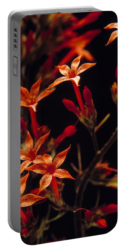 Wildflowers Portable Battery Charger featuring the photograph Sky Rocket by Leland D Howard