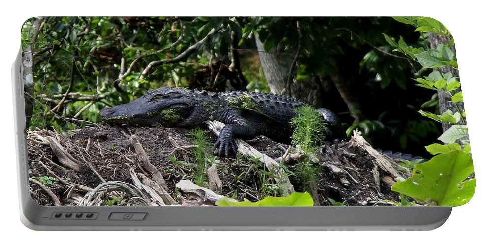 American Alligator Portable Battery Charger featuring the photograph Sleeping Alligator by Barbara Bowen