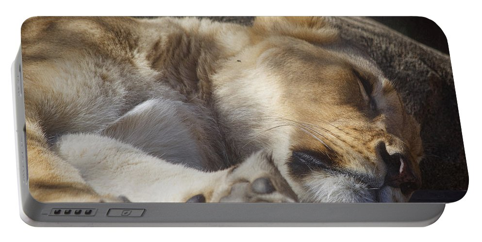 Lion Portable Battery Charger featuring the photograph Sleeping Beauty, Houston Zoo by TN Fairey