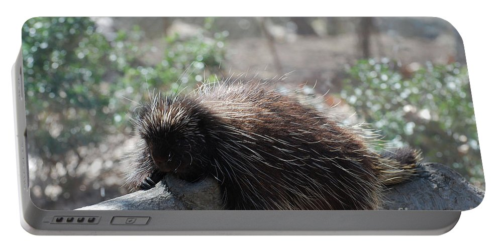 Porcupine Portable Battery Charger featuring the photograph Sleeping Porcupine With Lots Of Quills by DejaVu Designs