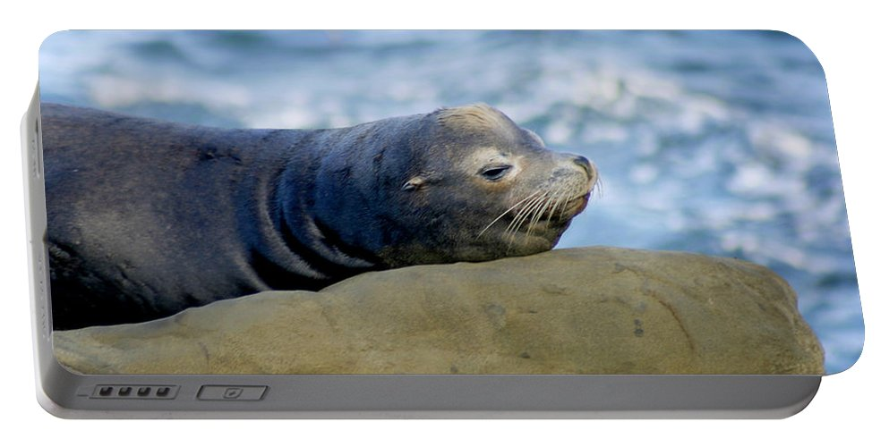 Seal Lion Portable Battery Charger featuring the photograph Sleeping Sea Lion by Anthony Jones