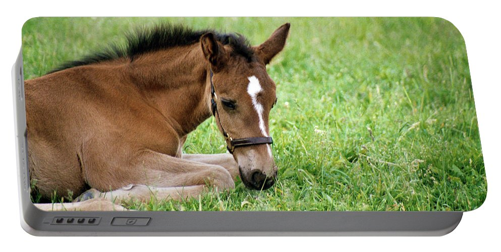 Horse Portable Battery Charger featuring the photograph Sleepy Foal by Alynne Landers