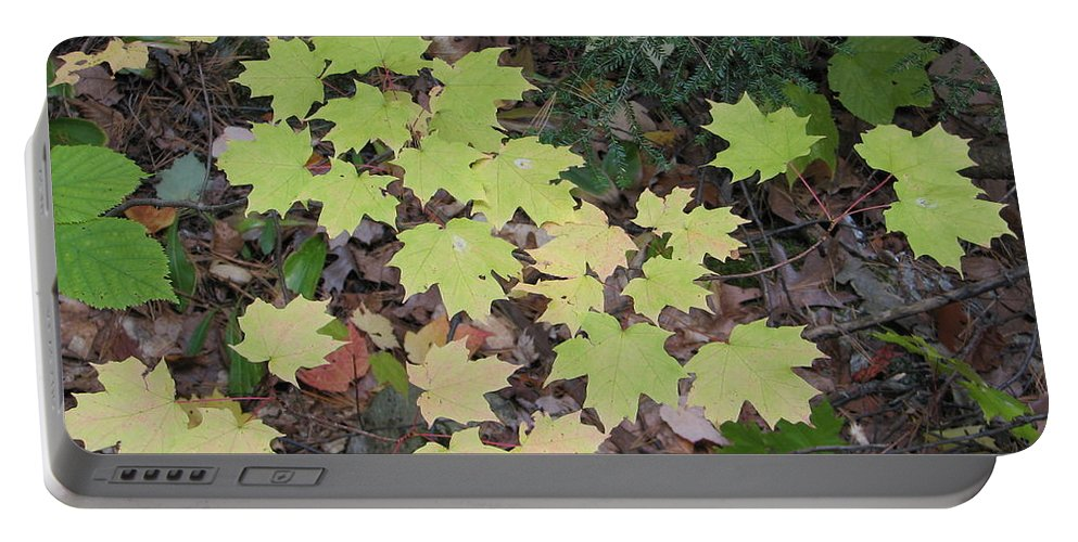Leaves Portable Battery Charger featuring the photograph Slow Fade by Kelly Mezzapelle