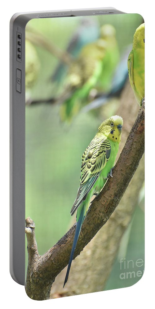 Budgie Portable Battery Charger featuring the photograph Small Budgie Birds With Beautiful Colored Feathers by DejaVu Designs