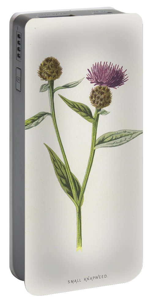 Botanical Portable Battery Charger featuring the painting Small Knapweed by Frederick Edward Hulme