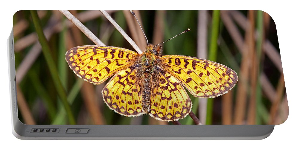 Small Pearl-bordwered Fritillary Portable Battery Charger featuring the photograph Small Pearl-bordered Fritillary by Bob Kemp