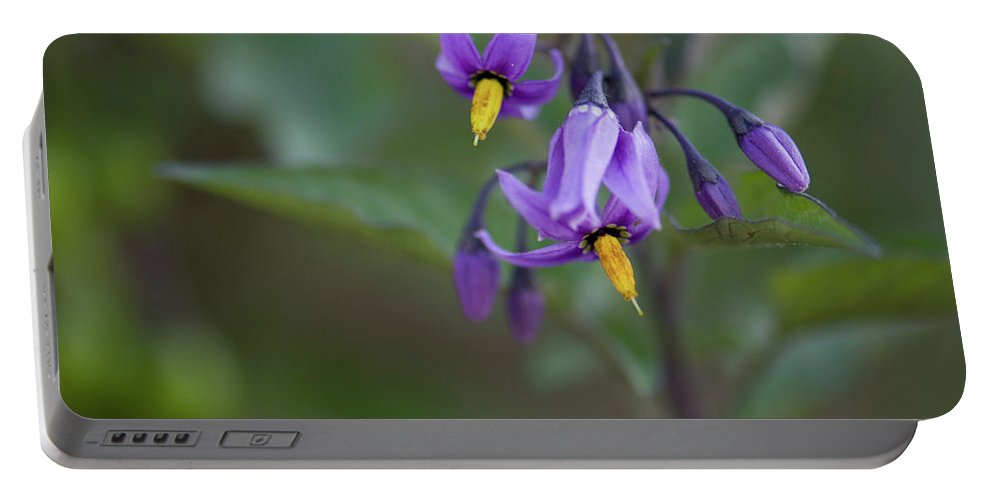 wild Flowers Portable Battery Charger featuring the photograph Small Wonder by Paul Mangold