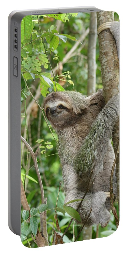 Sloth Portable Battery Charger featuring the photograph Smiling Sloth by Kelly Foreman