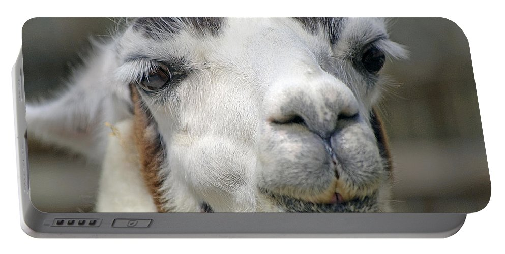 Llama Portable Battery Charger featuring the photograph Smug Llama by Kenneth Albin