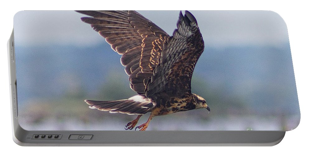 Birds Portable Battery Charger featuring the photograph Snail Kite by Bob Hislop