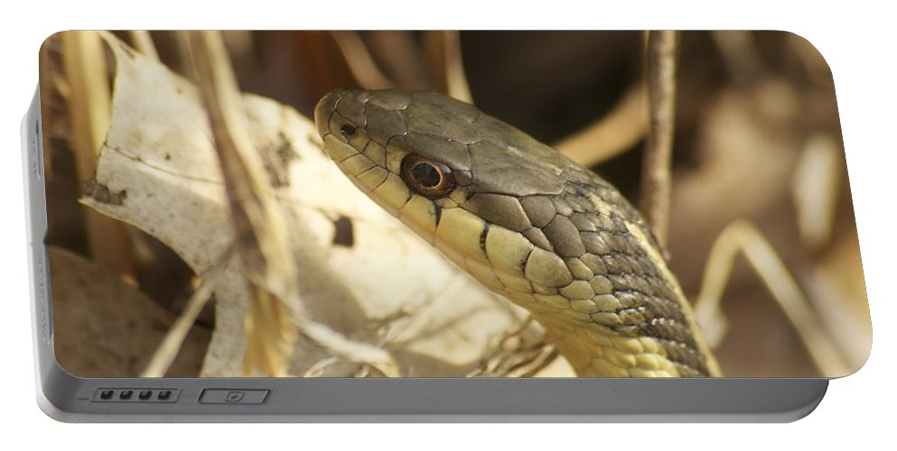 Wildlife Portable Battery Charger featuring the photograph Snake Eye by Michael Peychich