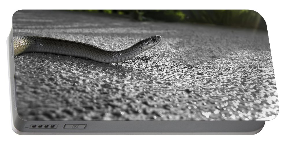 Snake Portable Battery Charger featuring the photograph Snake In The Sun by Amber Flowers