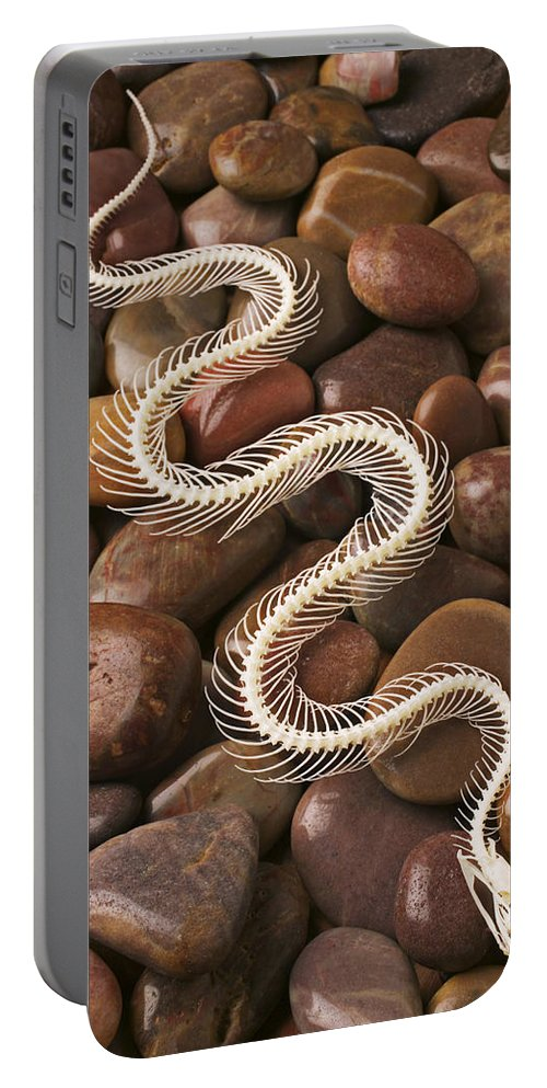 Snake Portable Battery Charger featuring the photograph Snake Skeleton by Garry Gay
