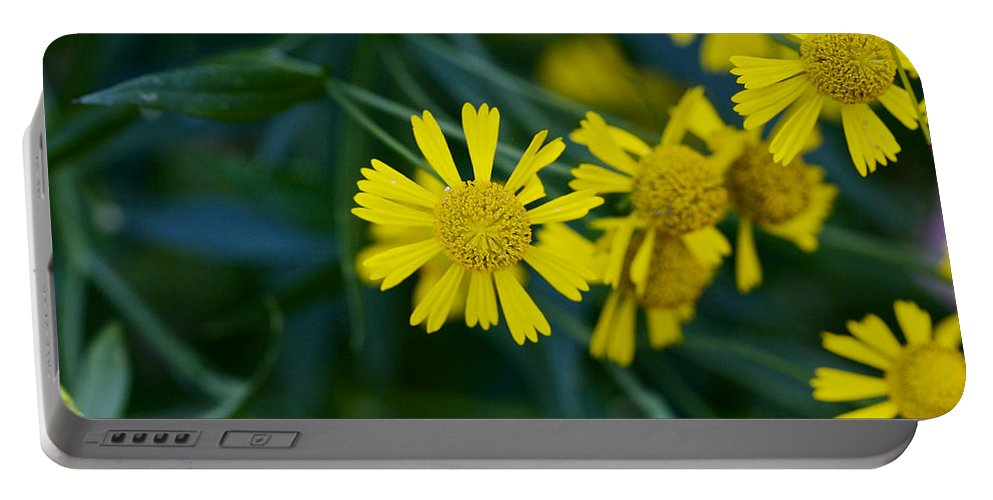 Abstract Portable Battery Charger featuring the photograph Sneezeweed by Jack R Perry