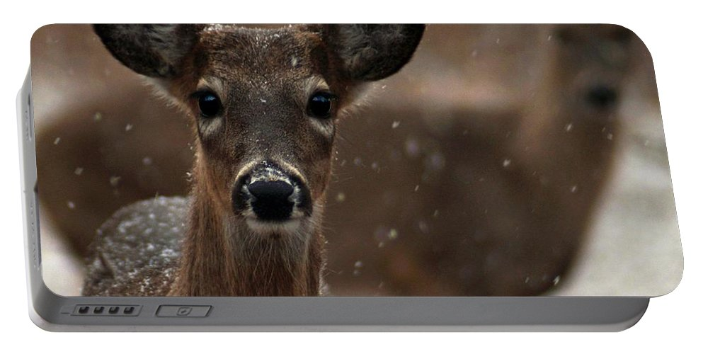 Deer Portable Battery Charger featuring the photograph Snow Again 2 by Bill Stephens