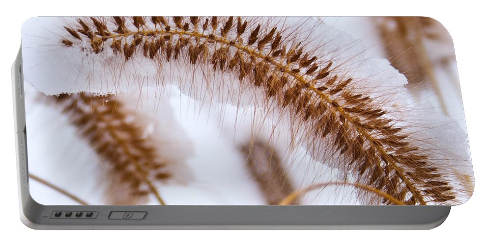 Foxtail Portable Battery Charger featuring the photograph Snow Capped Foxtail by Douglas Barnett