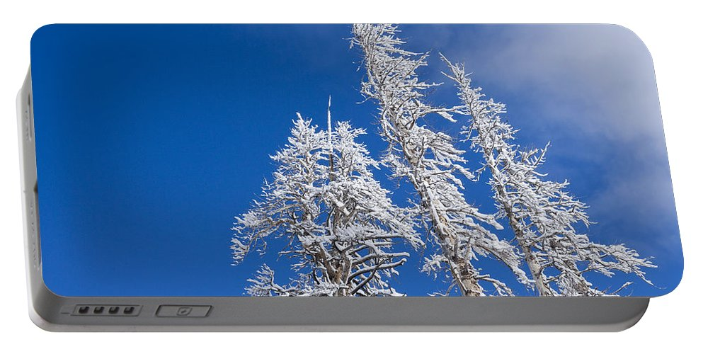 Winter Portable Battery Charger featuring the photograph Snow Covered Trees by Kelley King