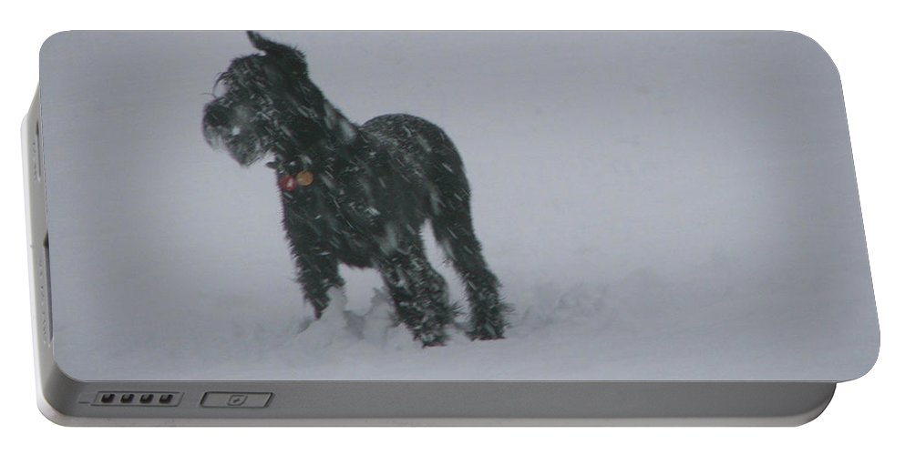 Snow Portable Battery Charger featuring the photograph Snow Dog by Heather Lennox