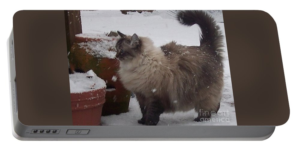 Cats Portable Battery Charger featuring the photograph Snow Kitty by Debbi Granruth