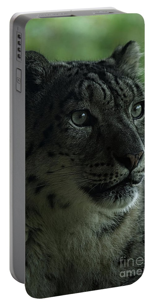 Portable Battery Charger featuring the photograph Snow Leopard by Rawshutterbug
