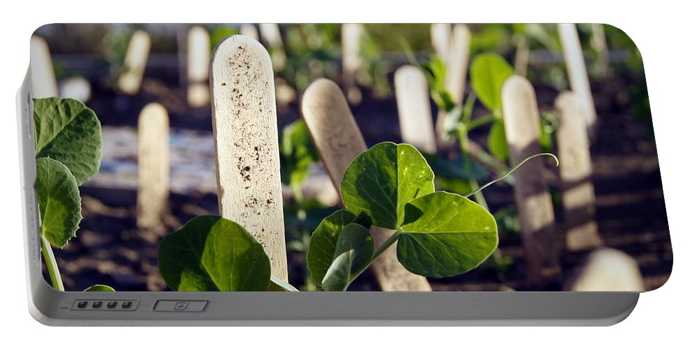 Peas Portable Battery Charger featuring the photograph Snow Peas Please by Cricket Hackmann