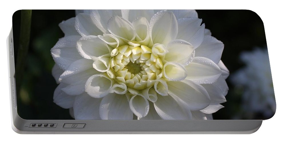 Dahlias Portable Battery Charger featuring the photograph Snowball Dahlia 2 by Jane Powell