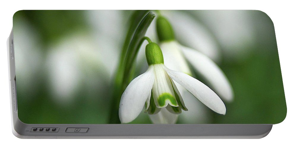 Snowdrops Portable Battery Charger featuring the photograph Snowdrops by Sharon Talson